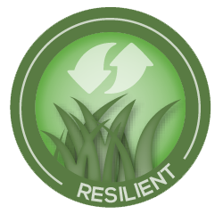 artificial grass resilient